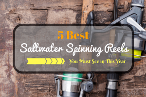 5 Best Saltwater Spinning Reel
