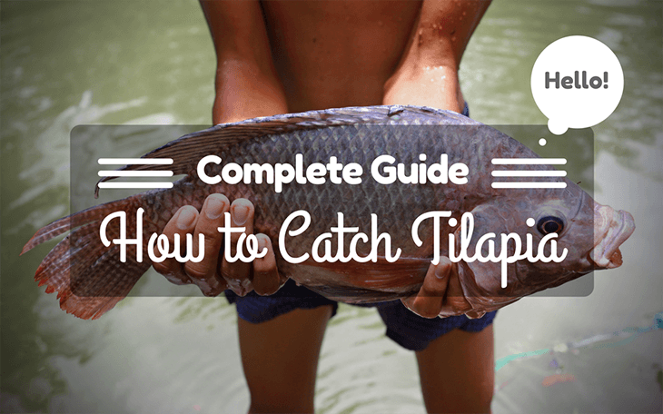 Complete Guide for How to Catch Tilapia