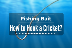 How to Hook a Cricket