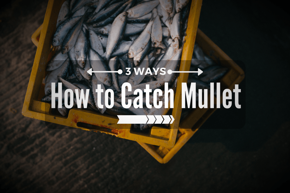How to Catch Mullet
