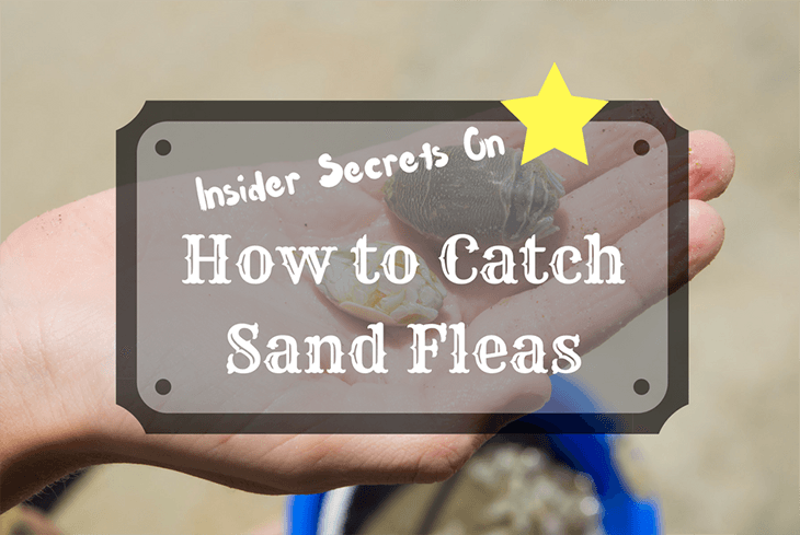 Insider Secrets on How to Catch Sand Fleas