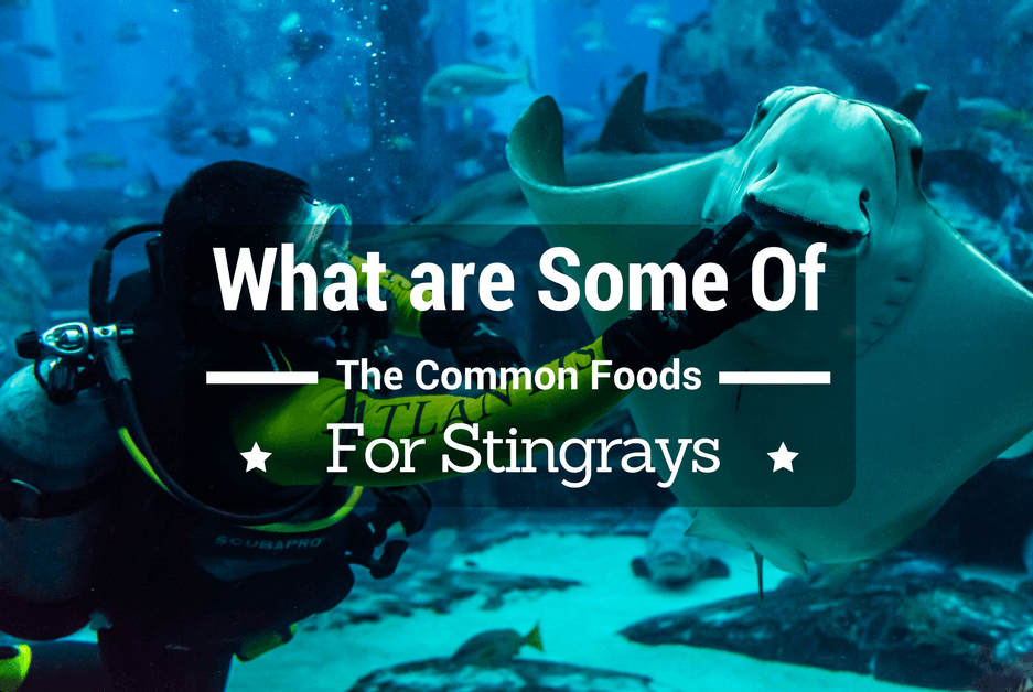 What are Some of The Common Foods for Stingrays