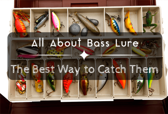 All About Bass Lure The Best Way to Catch Them