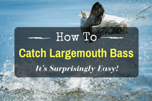 How To Catch Largemouth Bass – It's Surprisingly Easy!