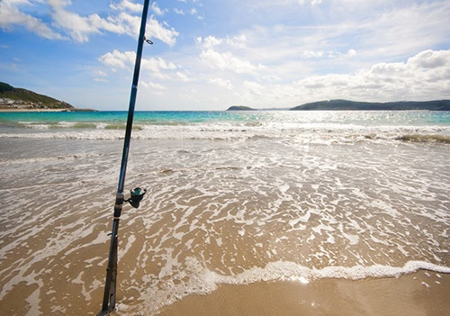 Things To Look For In The Best Surf Rod
