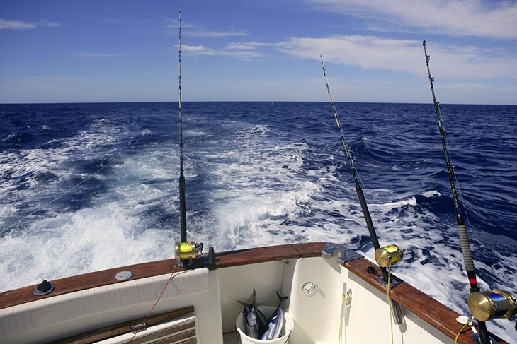 Trolling Reels Can Accommodate Many Fishing Lines
